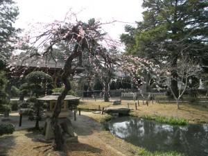 亀城公園 梅