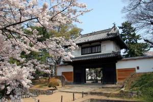 亀城公園桜②