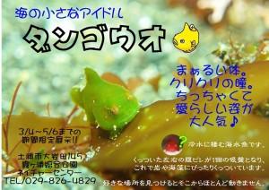 ダンゴチラシ