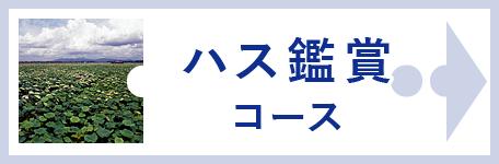 ハス鑑賞コース
