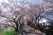 """Flower Spot """"Sakura River"""""""