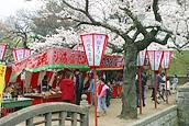 Tsuchiura Sakura Festival